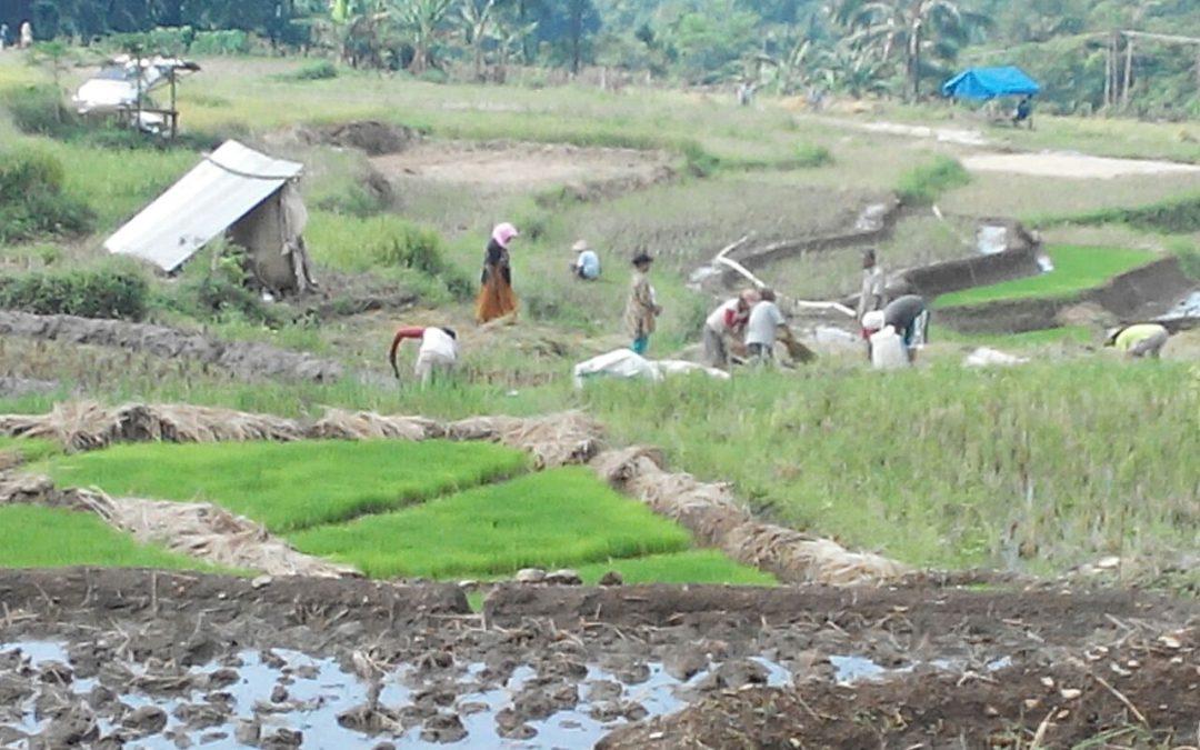 Menghitung Ketahanan Pangan Tingkat Desa
